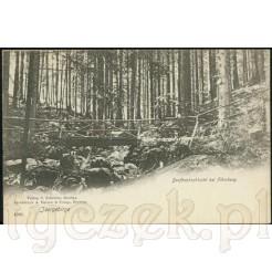 Świeradów Zdrój na zabytkowej kartce pocztowej