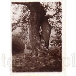 Młoda dziewczyna wspina się na słynny okaz przyrody w 1929 r.