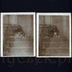 Dwa psiaki siedzące na schodach ujęte na dawnych zdjęciach