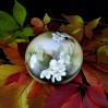 Piękna bombonierka posłuży jako pojemnik na drobne słodycze lub jako puzderko na toaletkę